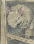 Golden Chinchilla painting for sale