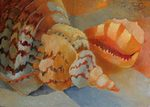 Seashells painting for sale